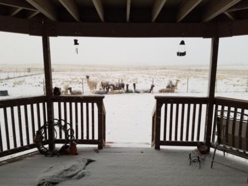 Snowy Front Porch